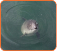 Marine-Mammal-Mitigation-Plans-Services