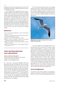 Celtic Sea ring-billed gull (PDF)
